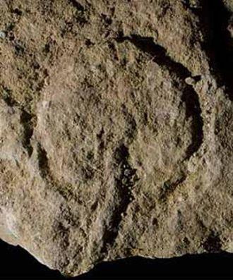 Najstarsza wagina na świecie